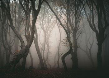bosque de los enigmas